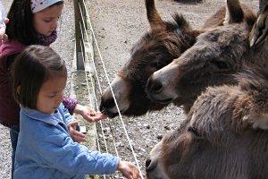 Natur- und Tierpark Goldau