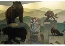 Naturmuseum Luzern