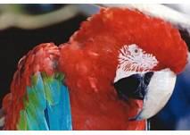 Vogelpark Birka
