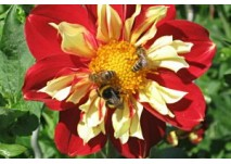 Bienenlehrpfad Pfäffikon