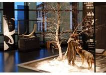 Museum für Urgeschichte(n) Zug