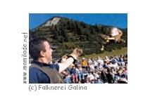Falknerei Galina