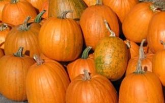 Halloween Seegräben