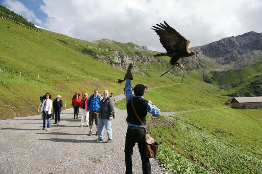 Habicht-Erlebnis-Wanderung