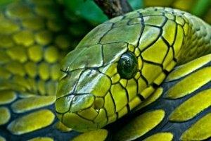 Schlangenzoo Eschlikon