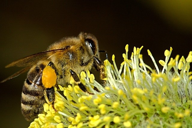 Schafisheim Bienenlehrpfad