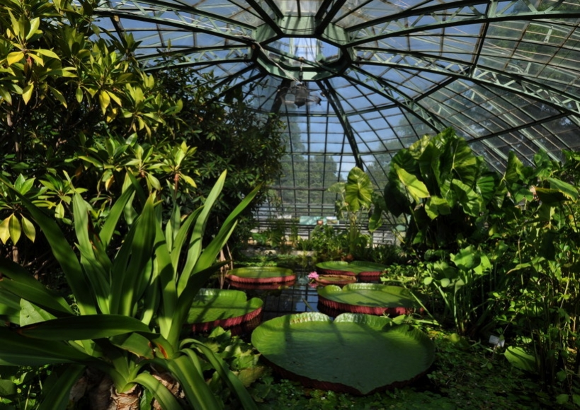 Botanischer Garten der Universität Basel