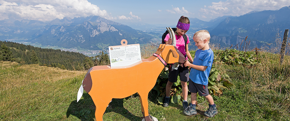 Heidipfad zur Alp Schwarzbüel