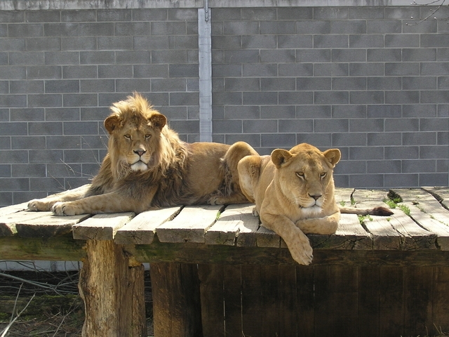 Plättli Zoo Frauenfeld