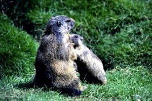 Wildpark Peter und Paul