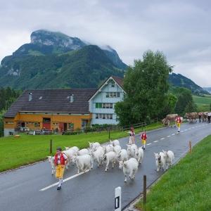 Erlebnisrundfahrt im Appenzellerland
