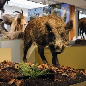 Chur Bündner Naturmuseum