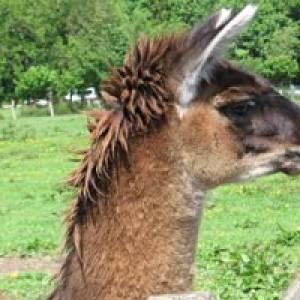 Chur Tier- und Freizeitpark