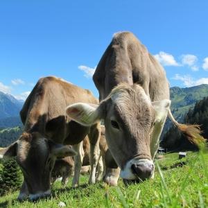 Längenberger Bauernpfad in Niedermuhlern