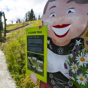 Flower Trail: Themenweg am Allmendhubel / Mürren