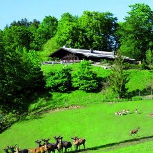 Bergrestaurant Wolfschwang-Alm in Großgmain