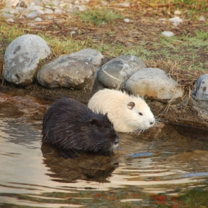 Tier-  & Erlebnispark Seeteufel