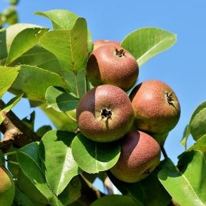 Lehrreicher Obstlehrpfad in Altnau