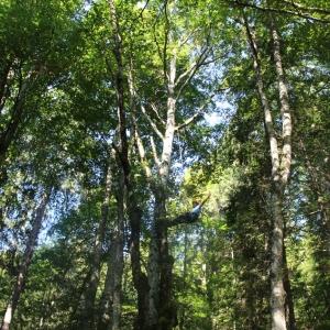 Seilpark Forest Jump im Jura