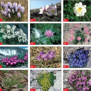 Themenweg: San Bernardino und seine alpine Umwelt
