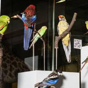 Zoologisches Museum Zürich