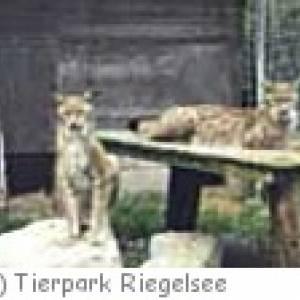 Tierpark Riegelsee in Kandergrund