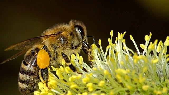 Bienenlehrpfad in Pfäffikon