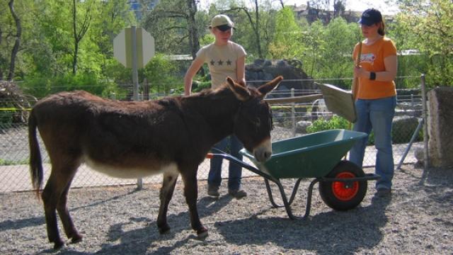 Arbeiten im Kinderzoo im Tierpark Dählhölzli Bern